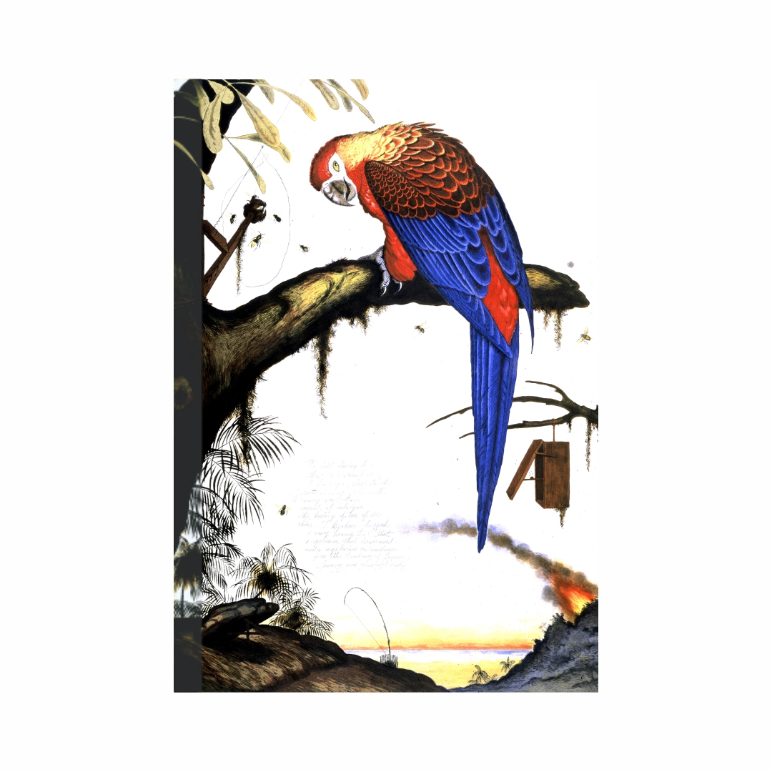 Colourful parrot beautiful art  Art abstract   Modern Canvas wall art Painting  50Cm X 43Cm